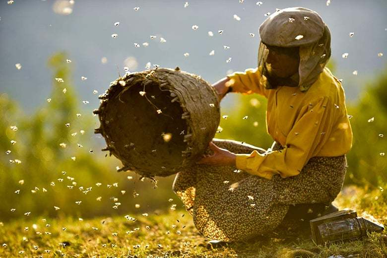 Still frame from Honeyland showing bee keeper surrounded by bees in the countryside