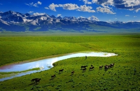 Animals graze across vibrant green grass in Mongolian landscape